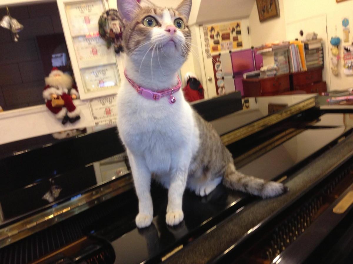 音樂家貓奴日誌