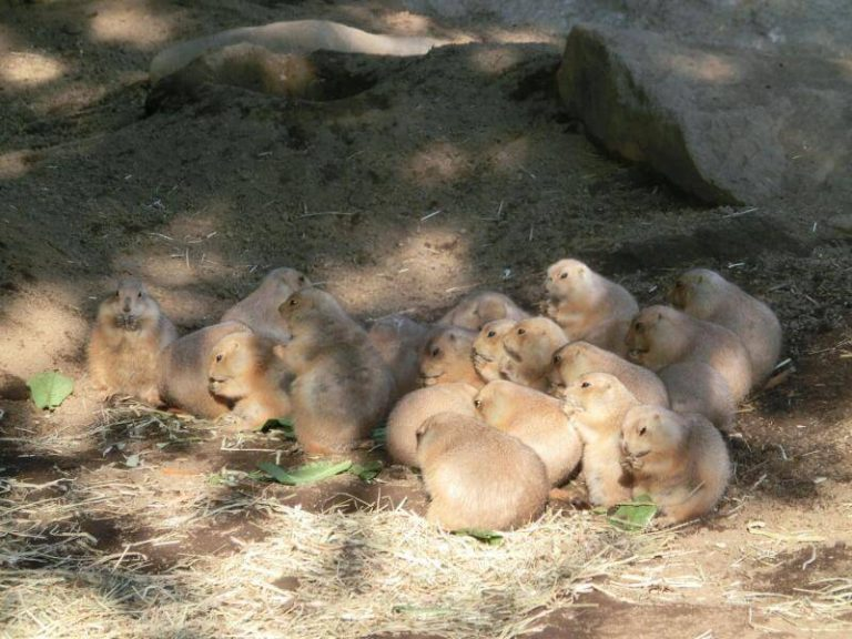 https-content.skyscnr.com-1fc6d672c047b0b654613d8422cec4ed-zoo-animal-tokyo.jpg-resize800px-99999pxquality75-768x576