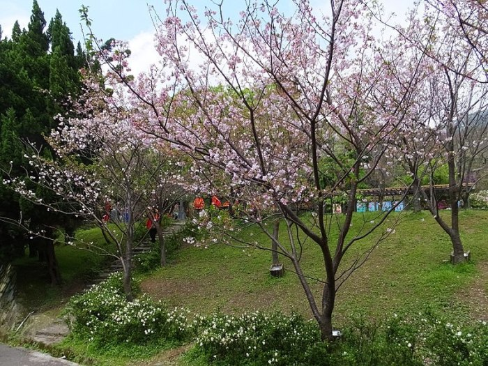 800px-Yangmingshan_Park_陽明山公園_-_panoramio_2