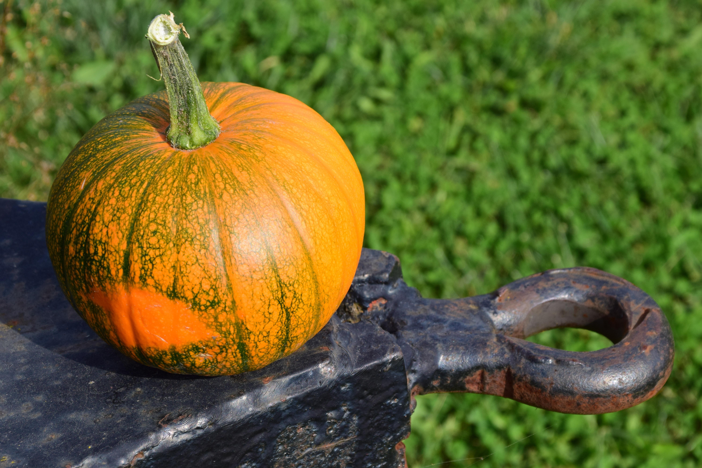 agriculture-autumn-close-up-color-221113