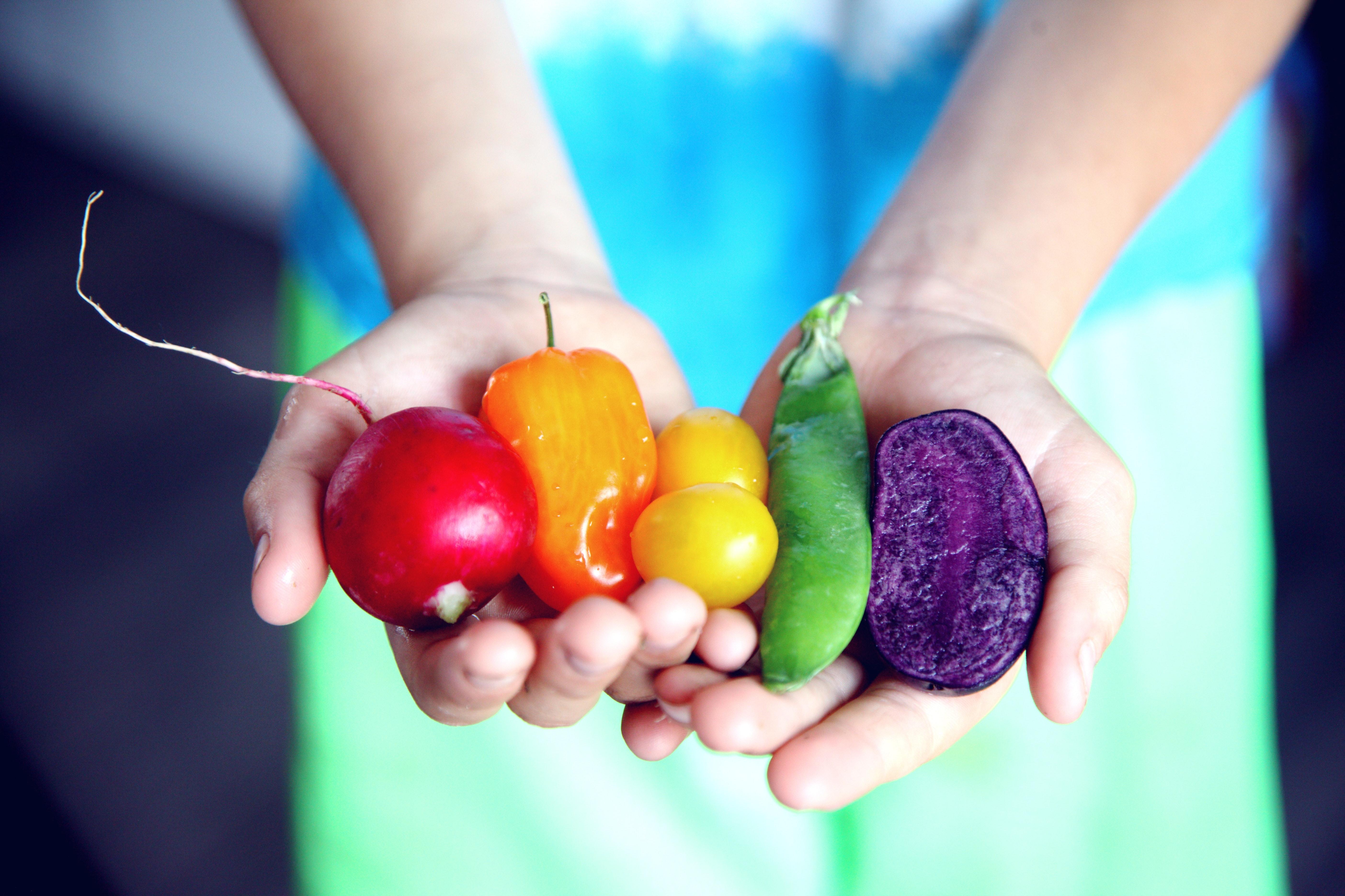 tilt-shift-lens-photography-of-five-assorted-vegetables-1196516