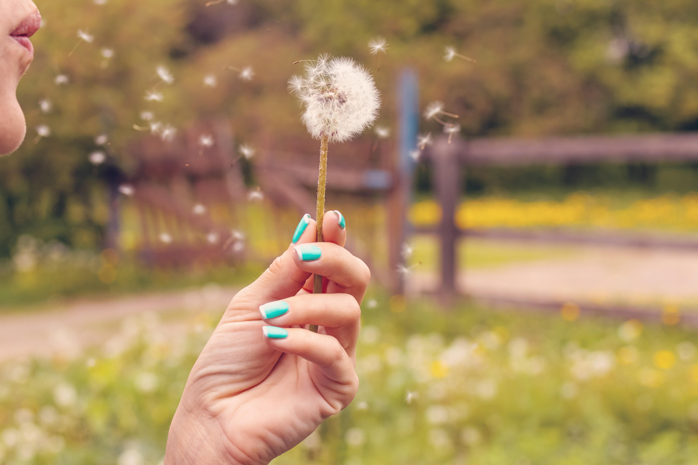 person-blowing-dandelion-2376187