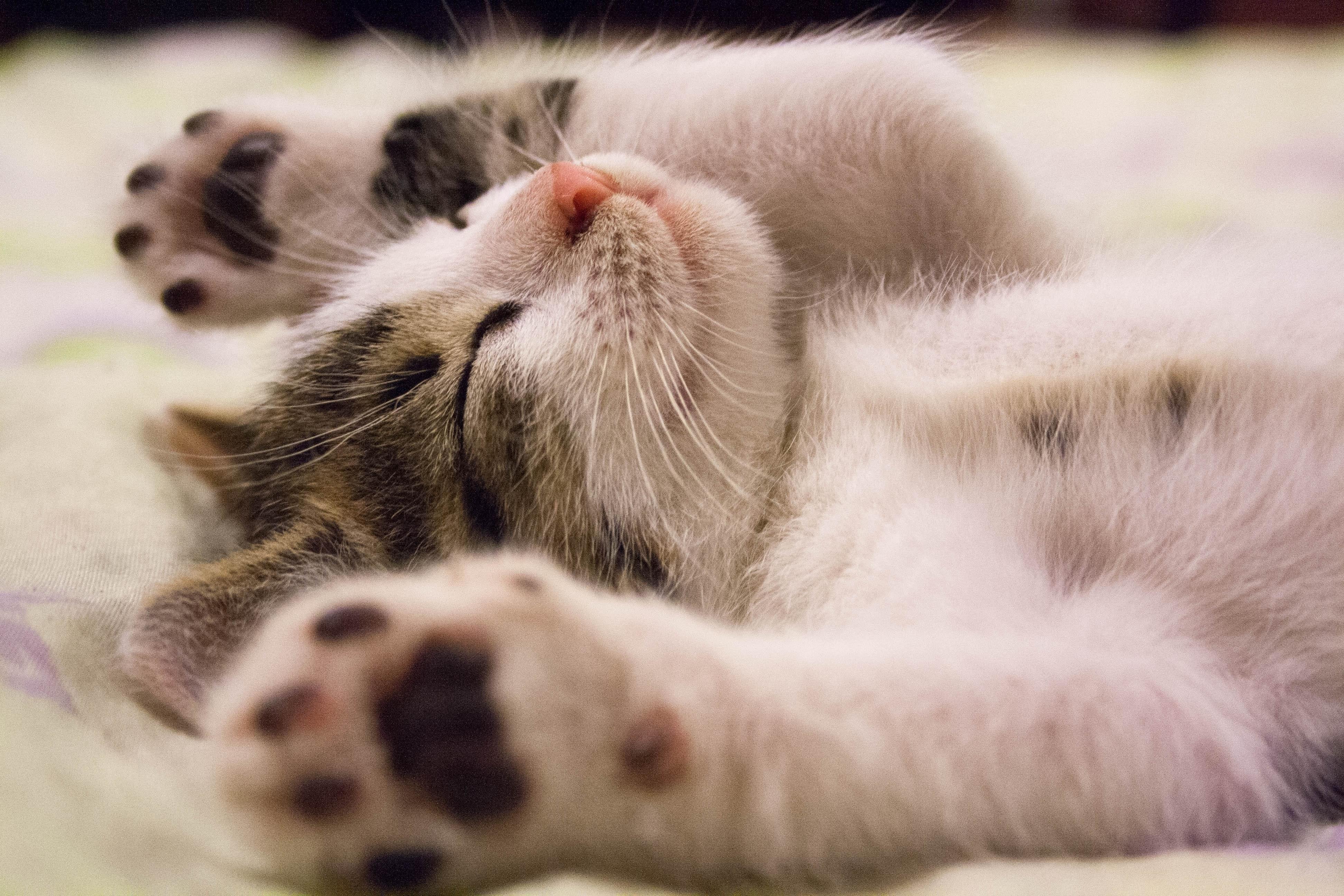 animal-cat-face-close-up-feline-416160